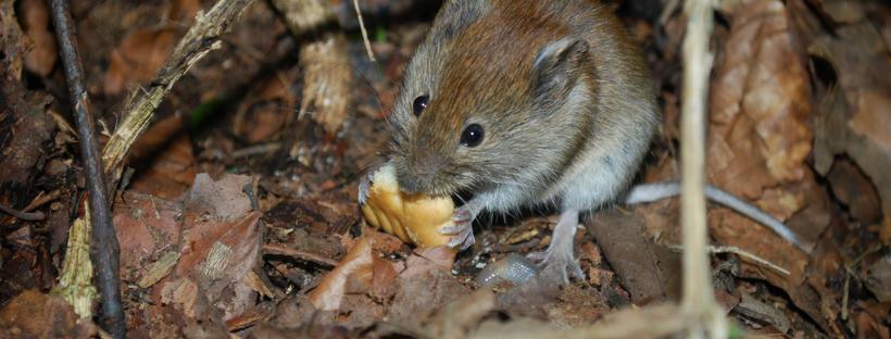 Mouse Exterminator Philadelphia